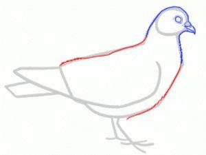 Как поэтапно нарисовать карандашом голубя детям 23