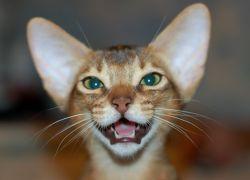 Когда у котят меняются зубы