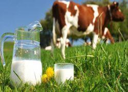 коровье молоко польза и вред