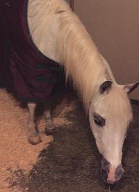 У лошади пока нет имени