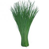 лук лук полезни свойства