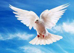международный день мира 1