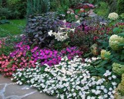 Цветя за миксбордове