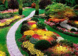 Многогодишни декоративни растения