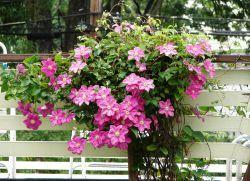 Трайни насаждения за градината