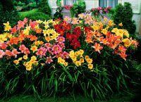 Трайни насаждения за градината 10