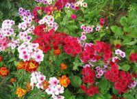 Трайни насаждения за градината 12
