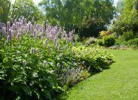 Трайни насаждения за градината 2