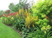 Трайни насаждения за градината 3
