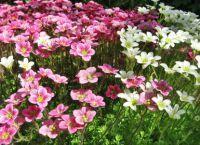 Трайни насаждения за градината 4