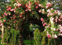 Трайни насаждения за градината 7