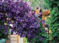 Трайни насаждения за градината 9