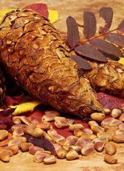 Настойка на кедровых орехах