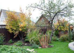 есен торене на овощни дървета и храсти