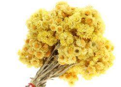 цветя жълт смил