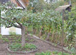Засаждане на овощни дървета и храсти в района