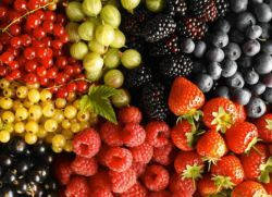 плодни храсти за градината