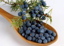 Плоды можжевельника – лечебные свойства