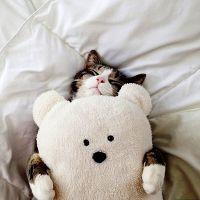 Почему кошки любят спать на людях?