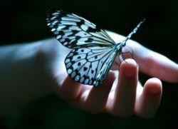 Примета - бабочка села на человека