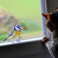 Примета - птица ударилась в окно и улетела