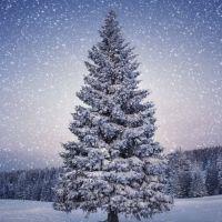 Приметы декабря