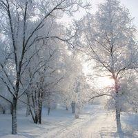 Приметы зимы