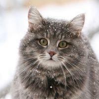 Приснилась кошка - что это значит?