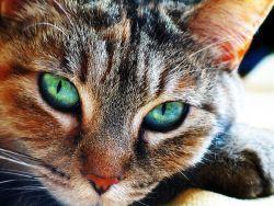 Признаки глистов у кошек