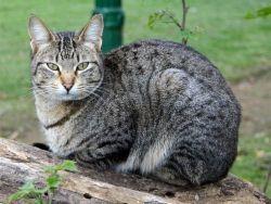 Признаки глистов у кошек1