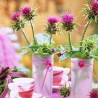 Расторопша – лечебные свойства