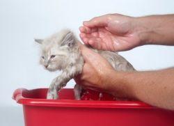 Шампунь от блох для кошек1