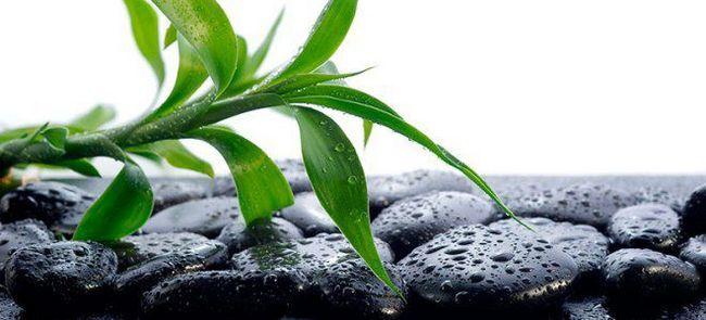 Шунгитовая вода – польза и вред