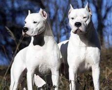 собаки для охраны дома