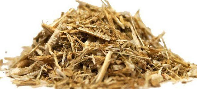 Солянка холмовая – лечебные свойства и противопоказания