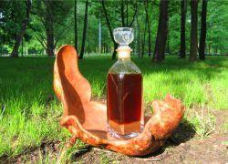 Струя бобра – приготовление настойки