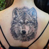 Тату волка – значение