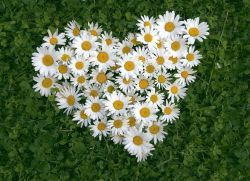 Травы для сердца