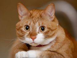 У кота выпал зуб