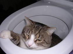 У котенка понос, что делать1