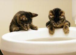 У котенка понос и рвота