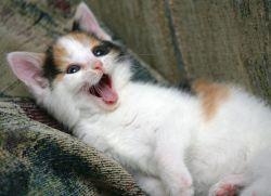 У котенка раздутый живот