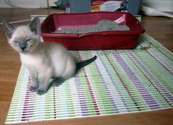 У котенка жидкий стул