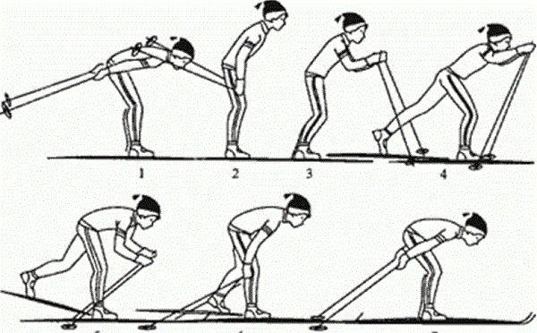 Виды ходьбы на лыжах