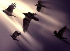 Ворона села на голову - примета