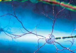 Восстановление нервной системы