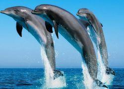 Всемирный день китов и дельфинов1