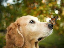 Всемирный день собак