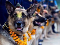 Всемирный день собак1