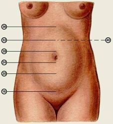 Высота дна матки при беременности